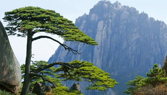 猩球崛起3经典台词黄山景区:我们对西海大峡谷的安全有信心