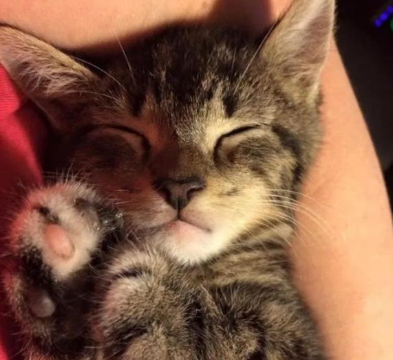 女孩捡到一只出生未久的小猫,照顾1月后,猫妈妈找上门