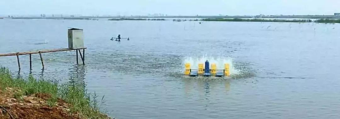 水产养殖中池塘中的氨氮危害这么大怎么办?