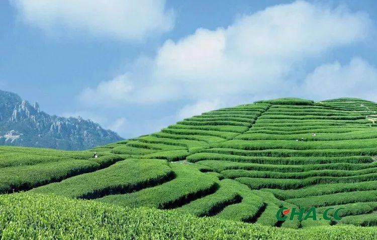 茶叶市场排行_全球茶叶市场持续扩大中国茶企排名大益上榜