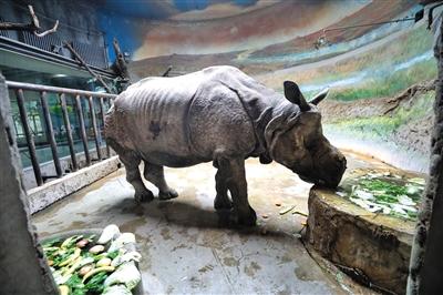 重阳节将至,北京动物园晚年动物享用加餐等特别待遇