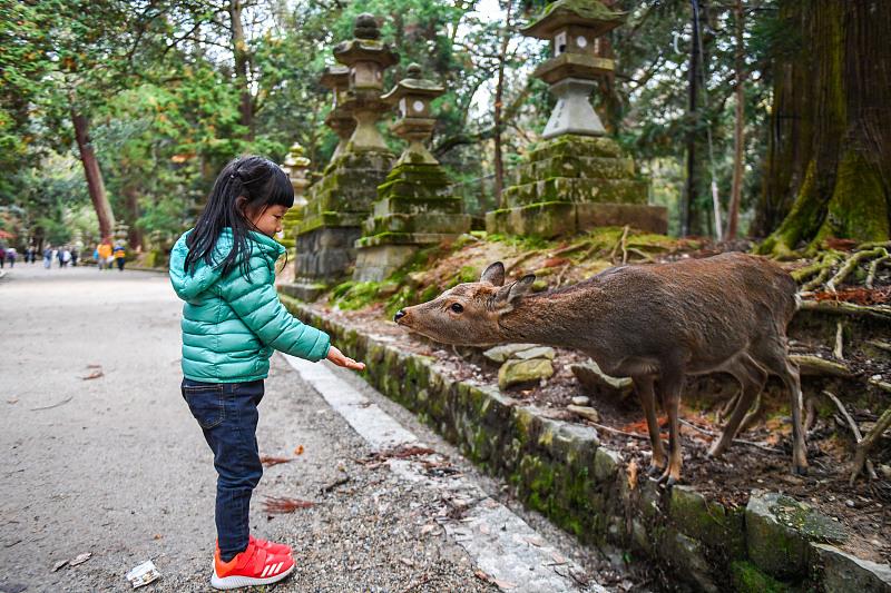 原创             都说旅行是最浪漫的教育,那么亲子游去日本关西要如何旅行呢