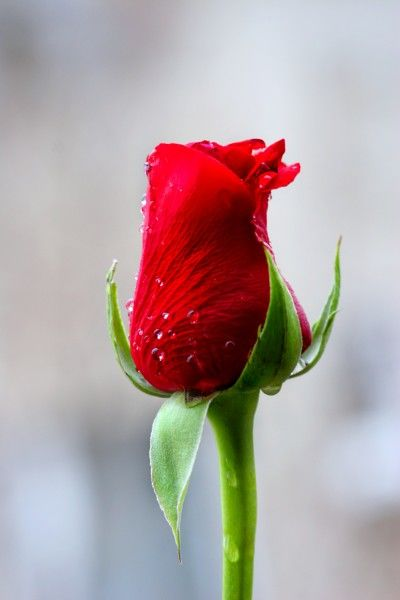 10月底,爱情事业双丰收,生活富足有余,走上人生巅峰的3个生肖