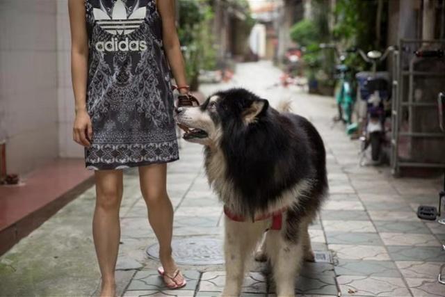 依法管理养犬