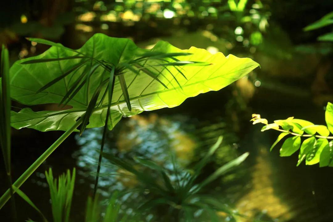 秋游|| 悦享假期,来雨林仙境