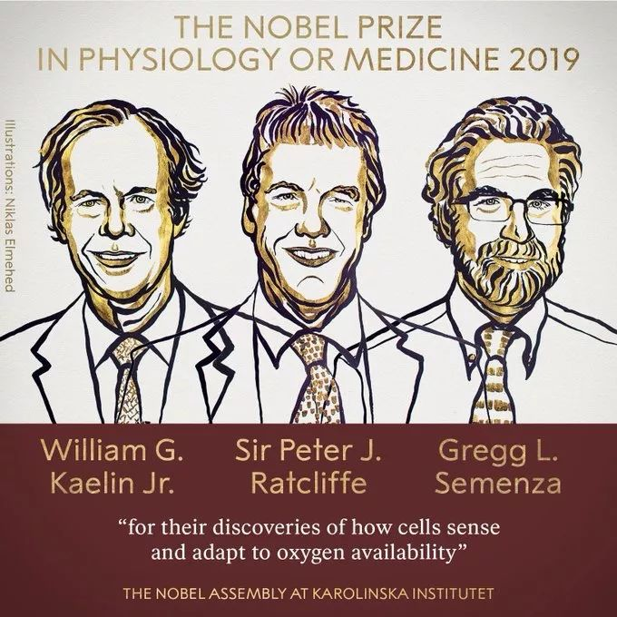 """2019首个诺贝尔奖揭晓:氧气决议人类命运,有用,却也""""有毒"""""""