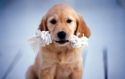 狗狗異食癖的危害有多大,作為主人的你有必要了解一下