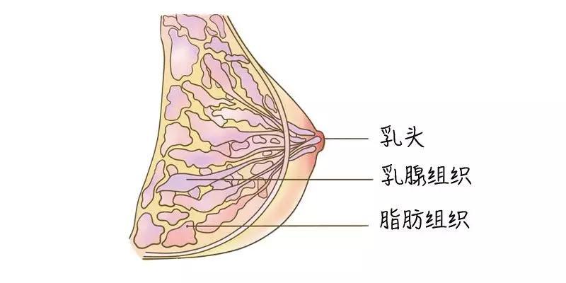 狐大医 | 男生勿入!92%的女生都选错胸衣?穿错会摊上乳腺癌吗