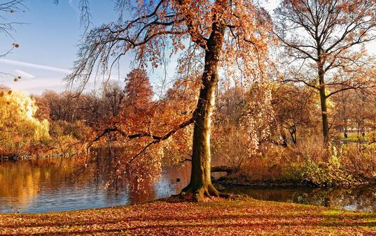 秋天养生正当时,常吃这3种食物,增强身体免疫力