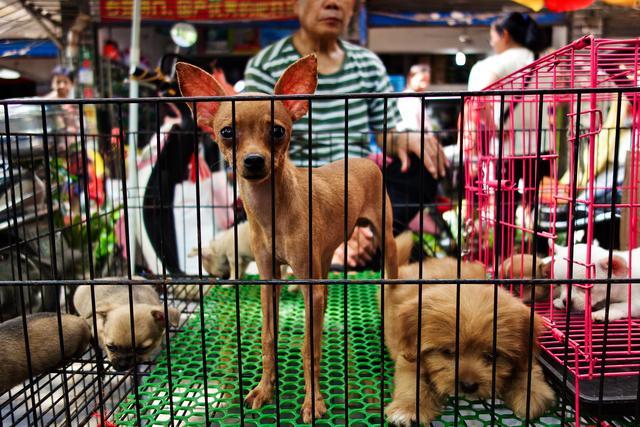 原创             桂林人每周必打卡的0元热门景点,宠物、古董、花鸟应有尽有