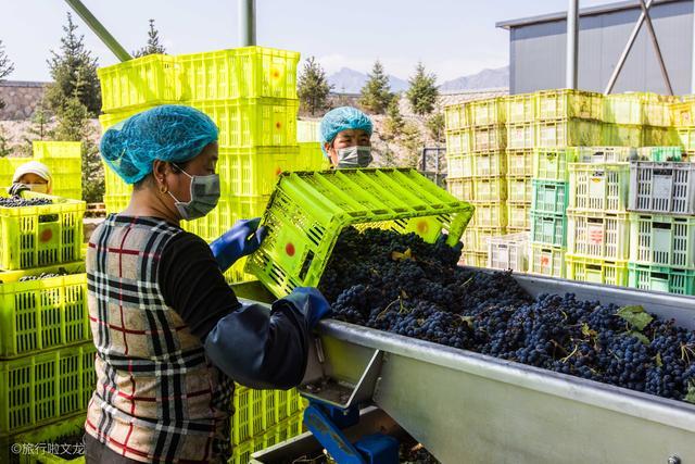 原创             贺金樽酒庄整合41家葡萄园,建立宁夏自己葡萄酒大单品品牌贺兰红