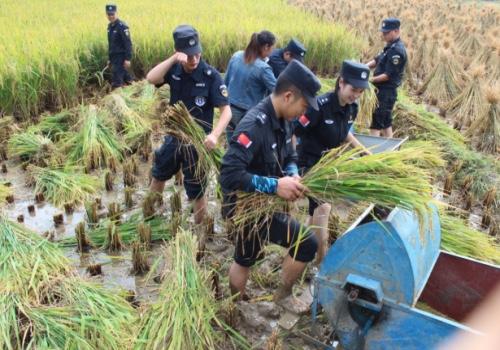 贵州一低保户遇秋收难题,特警连续10小时劳作帮忙抢收_务川县
