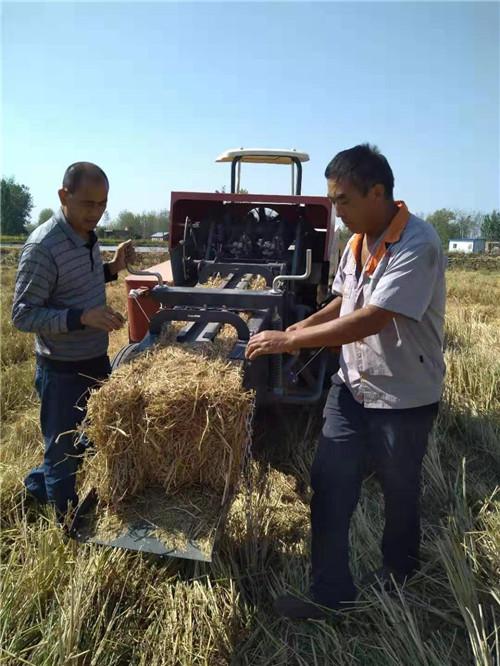 固始县徐集乡:稻 草 变 身 牛 饲 料