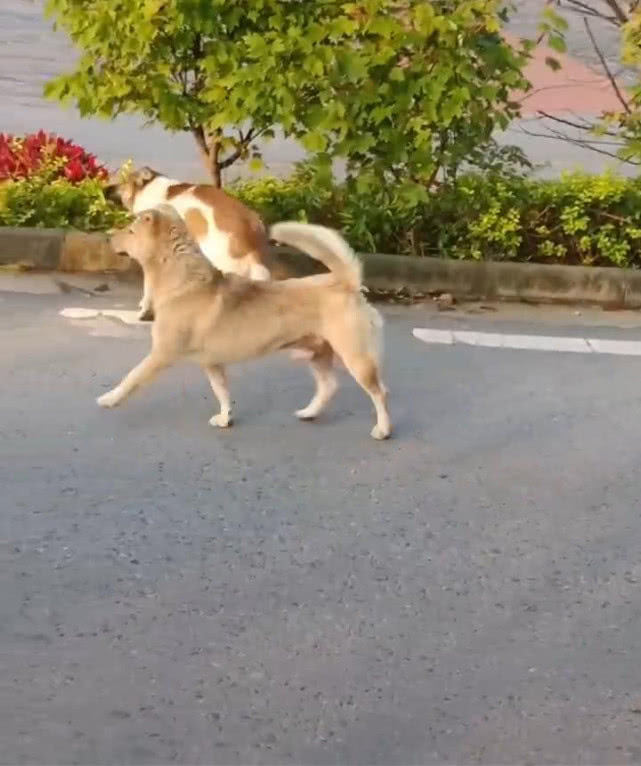 网赌取款钱说我注单异常_原创 男子偶遇两群狗,接下来的画面让他哭笑不得,网友:这是要搞事情