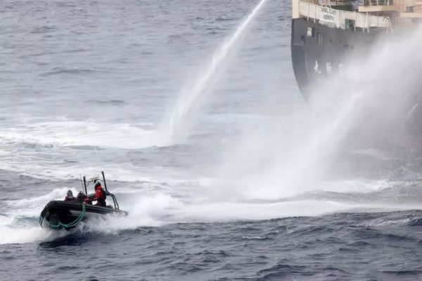 """震""""鲸""""全世界!日本重启商业捕鲸,1430吨鲸肉即将上市"""