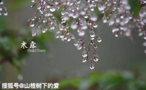 【山楂树下课堂:寒露到,秋雨寒,一起来了解寒露习俗】
