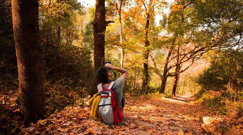 【婺源旅游赏秋攻略】婺源的秋天,绝不能错过