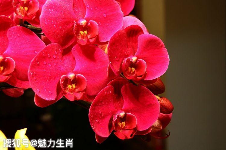 原创             恭喜四生肖来钱不断,10月11号开始财运迅速回春,好运连连势不可挡!