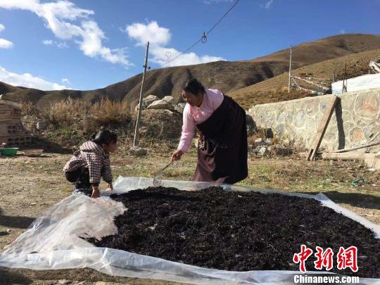 青海公益扶貧項目助力藏區貧困牧民增收