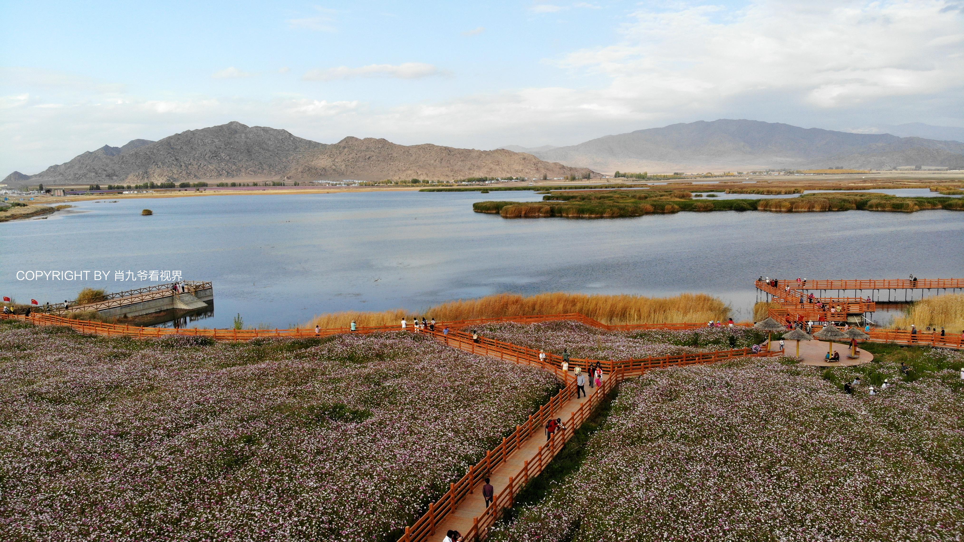 """原创             在富蕴县有个浪漫的花海叫""""可可苏里"""""""