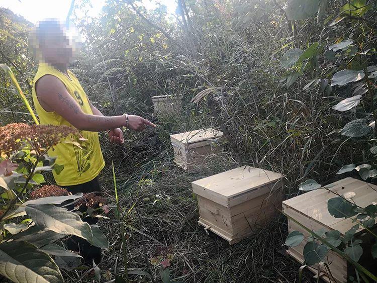 桑植两兄弟盗窃蜂蜜被拘
