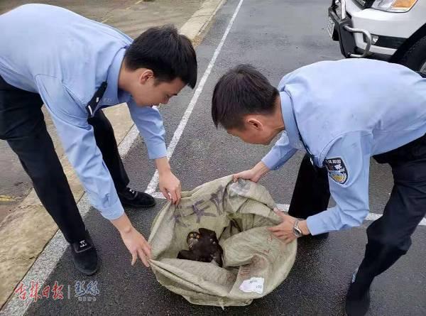 珲春森林公安局联合珲春市公安局成功救助一只雕鸮