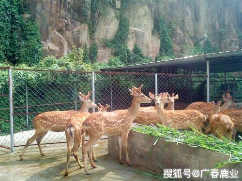 """黑龙江木兰县养鹿业养殖供销""""一条龙""""成为新亮点"""