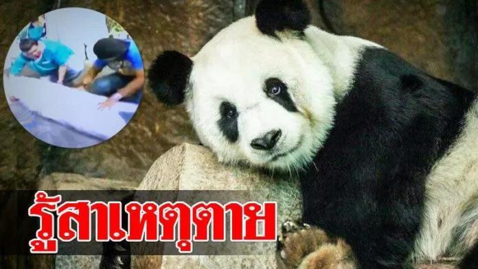 旅泰大熊貓死因公布,國寶出了國,那也得是個寶!泰方或将賠償損失!