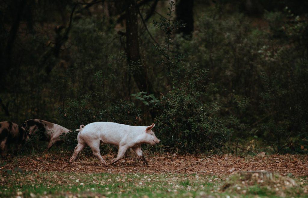 原创             牧原股份养猪扭亏为盈 实控人三年蝉联河南首富身价翻两倍