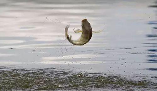 【钓鱼技巧】钓鱼人该懂的什么才是搓拉结合-第3张图片