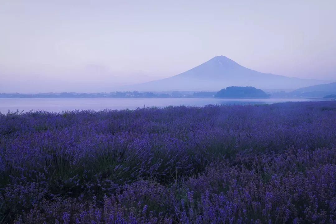 一生只为富士山拍照的人