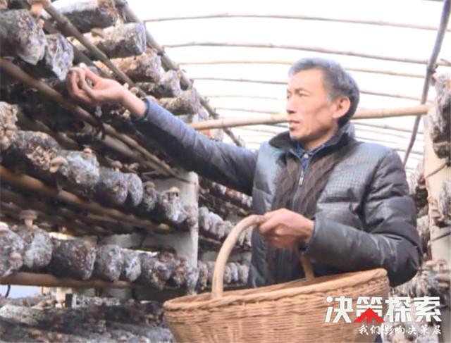 西峡县西坪镇李红欣:政策+勤劳=脱贫致富