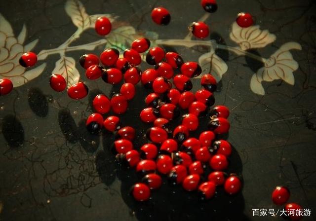 世界上最毒的植物,一颗种子足以致人死亡,却受很多年轻人喜欢!
