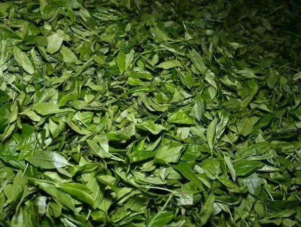 从一片鲜叶到好喝的安化黑茶从这里了解