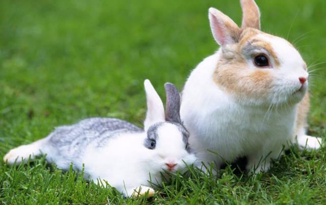 养兔子不能注射过多的疫苗,适合就行了