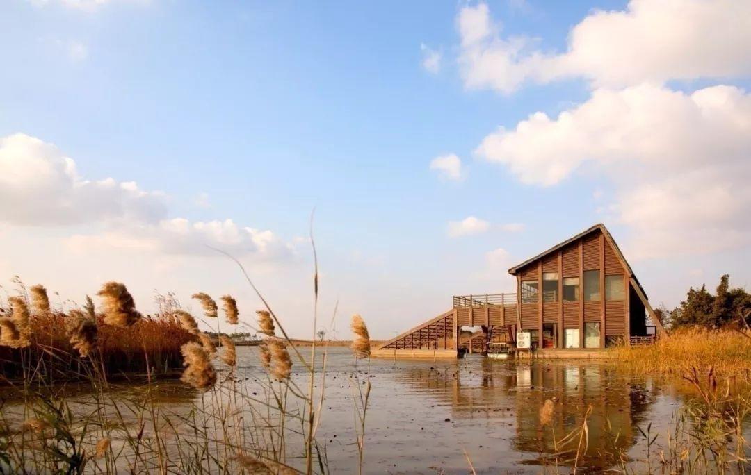 十月金黄一片!正好去秋游湿地,感受别样浪漫!