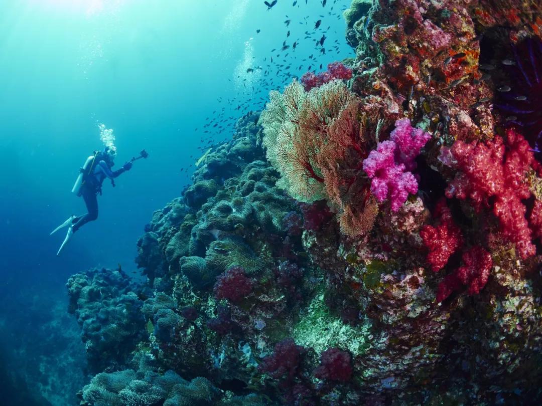 明日开放!这个限制级的绝美潜水圣地,又要来释放它的魅力了