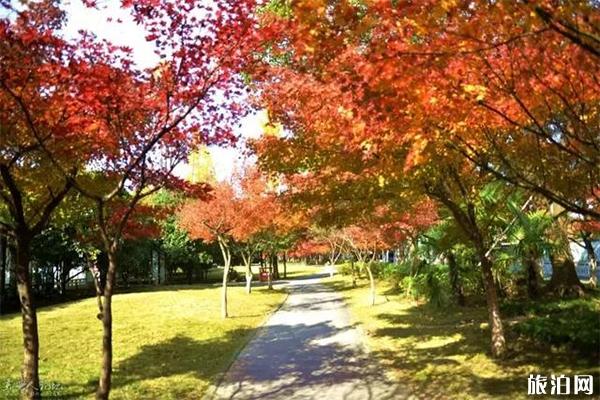 原创             南昌适合秋游和赏秋景的地方有哪些