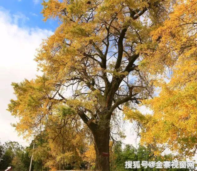穿越金寨这条优美公路曲线!一起来看千年古树!