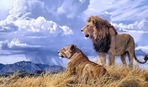 为何狮子可能被饿死,而老虎却不会网友:不愧是纹了身的
