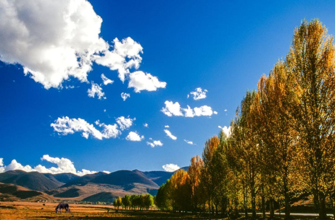 """再不去就晚了!2天打来回收割最美秋景,属于成都人的""""黄金时代""""!"""