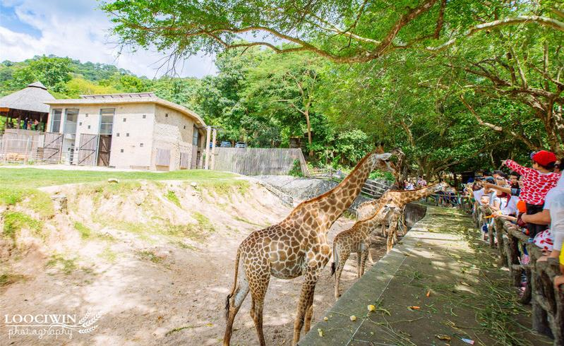 原创             泰国这一动物园,甚少中国游客知道,近距离与动物们接触