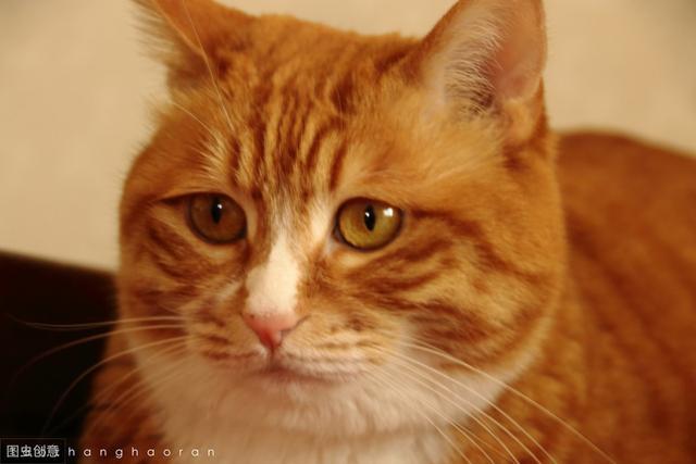性格最好的猫