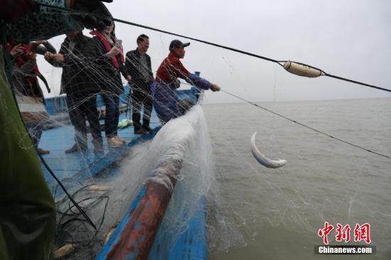 """长江已到""""无鱼""""等级全面禁渔迫在眉睫"""