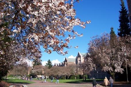 【院校申请】圣路易斯华盛顿大学标化成绩要求变化