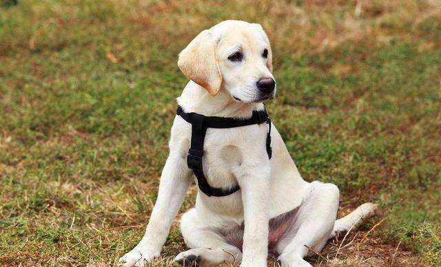 出现口臭的情况   很多宠主都以为狗狗出现口臭的原因,要不是没有定期清洁牙齿,要不是因为肠胃消化不良导致的口臭.