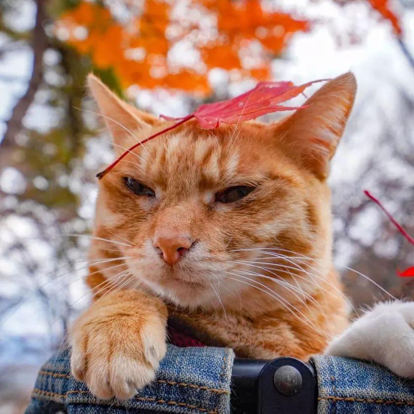 夫妇花了8年时间,带着两只猫走遍日本