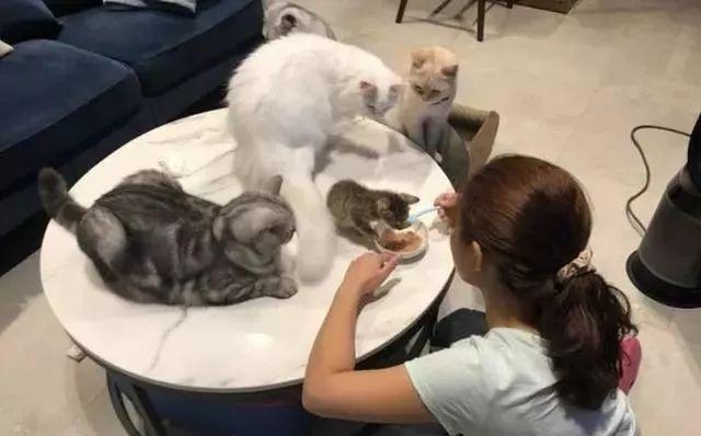 饭碗周围笼罩多只猫咪,小猫埋头吃饭,周围猫咪口水都要流下来了