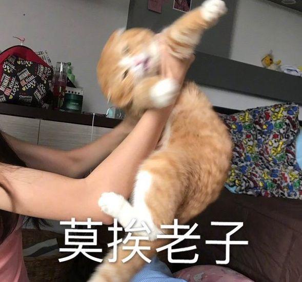 外国小哥想和俩猫一狗合影,好不容易摆好造型,结果…