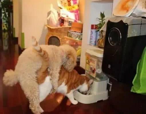 宠主打完游戏,回头看见泰迪正在摧残猫咪,大怒:坏狗,放开它